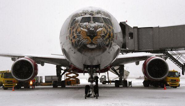 Самолет авиакомпании Россия, на котором доставят спасенного дальневосточного леопарда Leo 131M в Москву на лечение, в аэропорту Владивостока