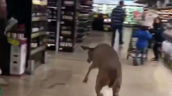 Олень в супермаркете Kroger в штате Индиана, США. Стоп-кадр видео очевидца
