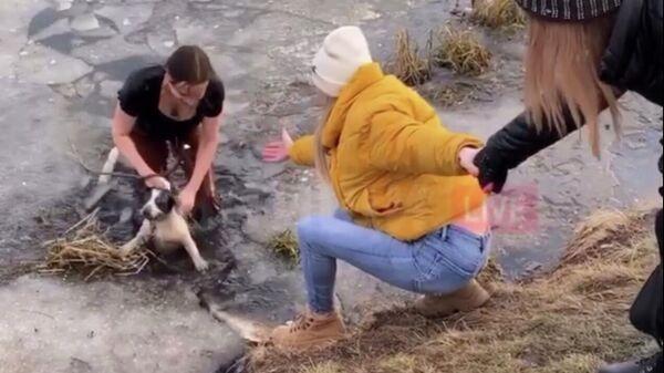 Стоп-кадр видео спасения собаки, провалившейся под лед