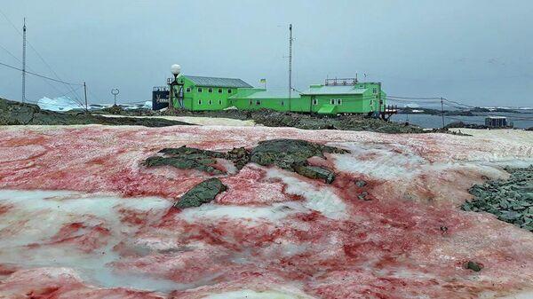 Снег красного цвета около украинской антарктической станции Академик Вернадский