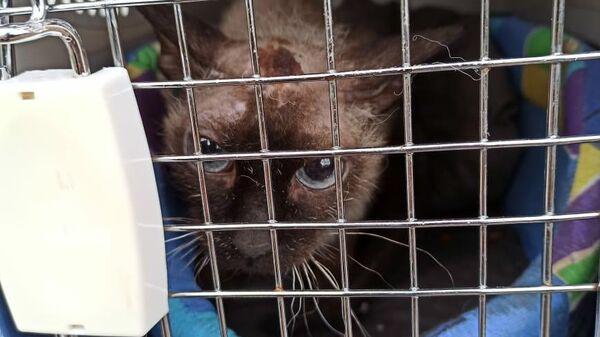 Кошка, спасенная с крыши трехэтажного таунхауса в Рязановском поселении
