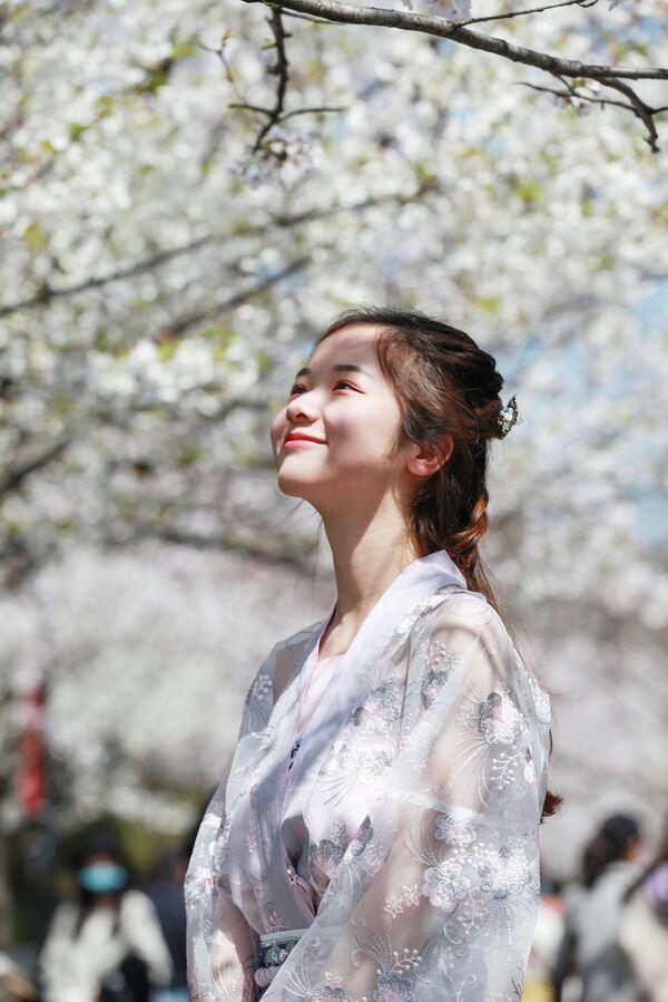 Девушка наблюдает за цветением сакуры в Нанкине