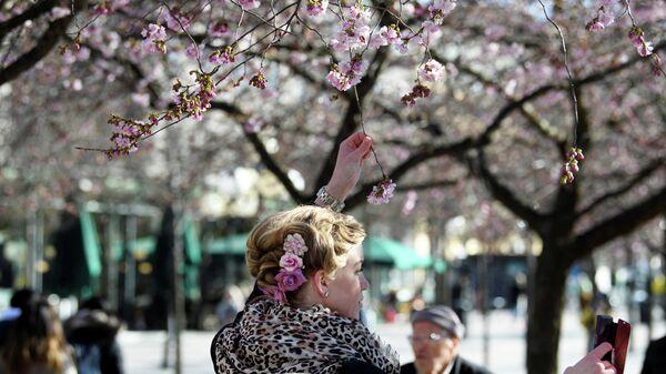 Посетительница фотографируется с цветущей сакурой в парке в Стокгольме