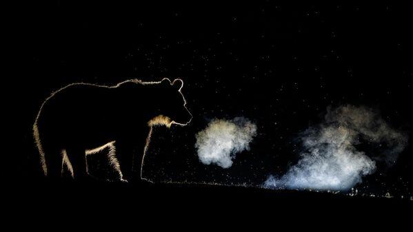 Bence Máté. Работа победителя конкурса Nature TTL Photographer of the Year 2020