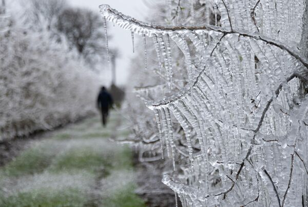 Замороженные яблони в Словакии