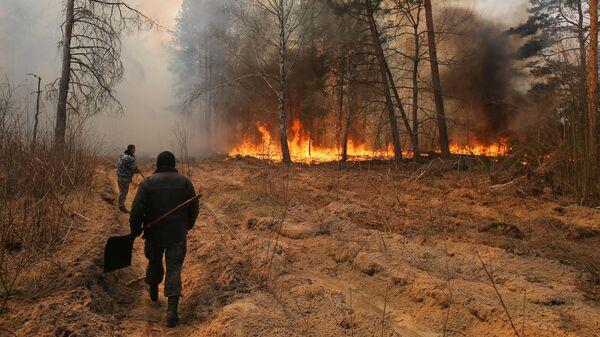 Сотрудники лесничества во время тушения пожара на территории зоны отчуждения Чернобыльской АЭС на Украине