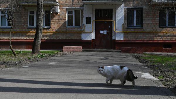 Кот гуляет во дворе на одной из улиц в Москве