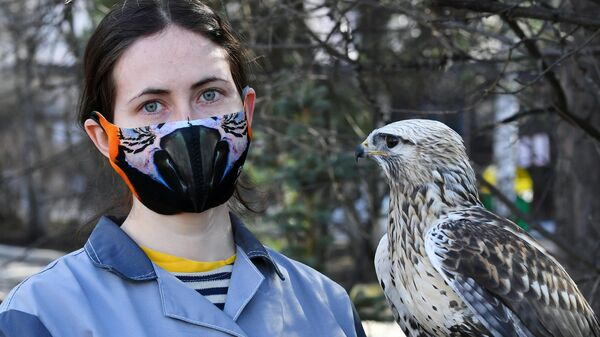 Орнитолог парка флоры и фауны Роев ручей Дарья Черешкевич в креативной защитной маске и канюк по кличке Стеша