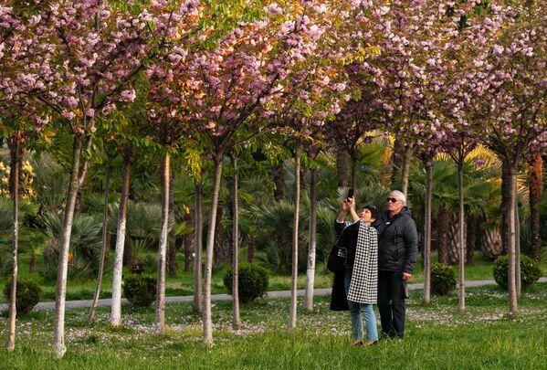 Женщина фотографирует на мобильный телефон цветы черешни на аллее Черешневый сад в Сочи