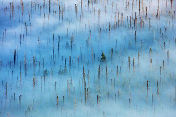 Работа фотографа Radomir Jakubowski в категории Растения и грибы в фотоконкурсе GDT Nature Photographer of the Year 2020