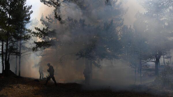 В России ликвидировали почти 40 лесных пожаров