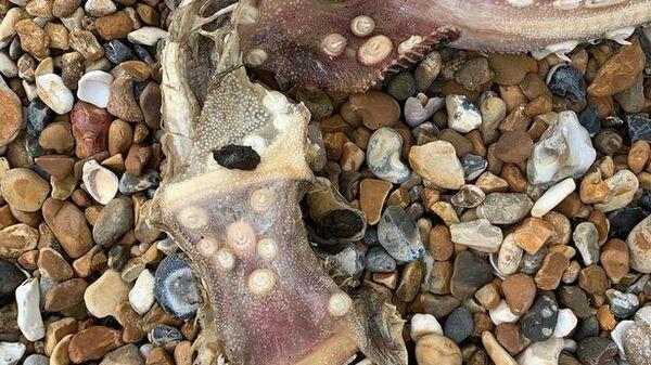 загадочный скелет на пляже Брайтона