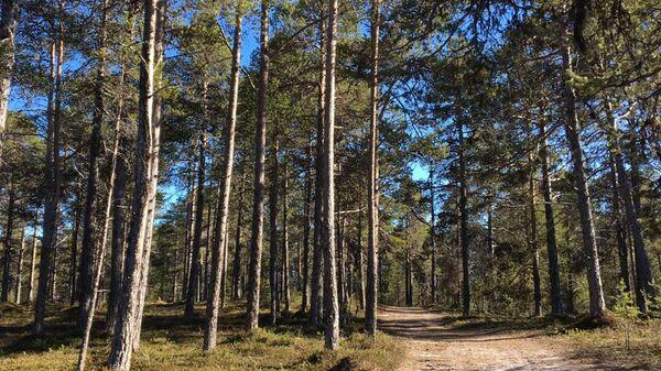 Глаголевы в лесу
