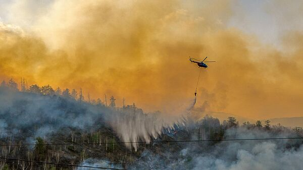 Экологи предупредили о риске лесных пожаров в Сибири из-за жары