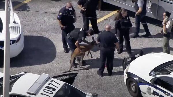 1574487177 34:0:1396:766 600x0 80 0 0 76cc15c92537993308161361d551fbc0 - В США полиция задержала кенгуру, гулявшего по улицам города
