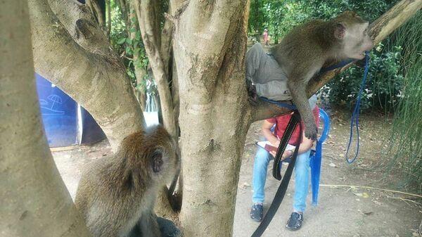 Рейд по выявлению фактов незаконного оказания фотоуслуг с животными в Сочи