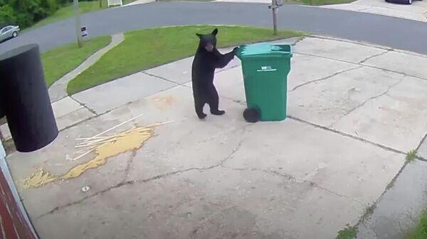 Медведь крадет мусорный бак в городе Мэри Эстер, Флорида, США