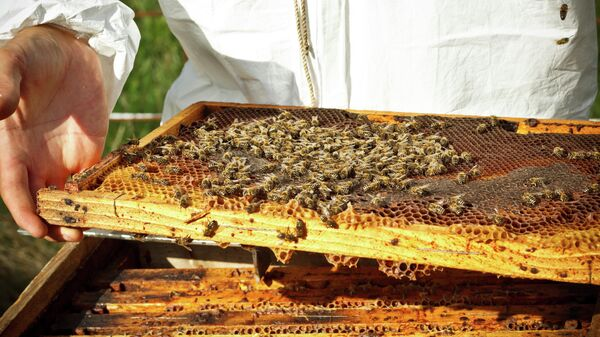 Пчеловод на пасеке