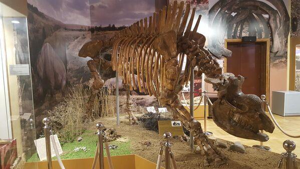 Скелет кавказского эласмотерия