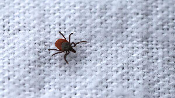 Борьба с насекомыми-переносчиками опасных заболеваний