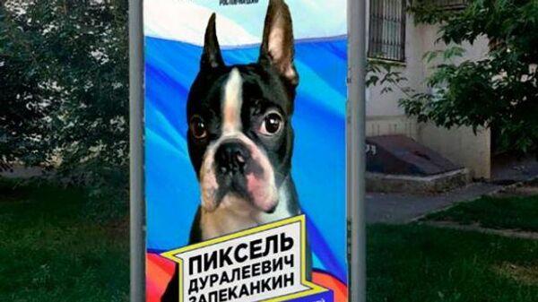 Предвыборный плакат пса по кличке Пиксель на одной из улиц Ростова-на-Дону