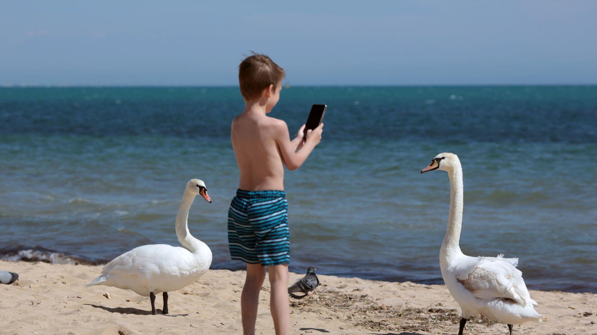 Мальчик снимает на смартфон лебедей - РИА Новости, 1920, 28.09.2020