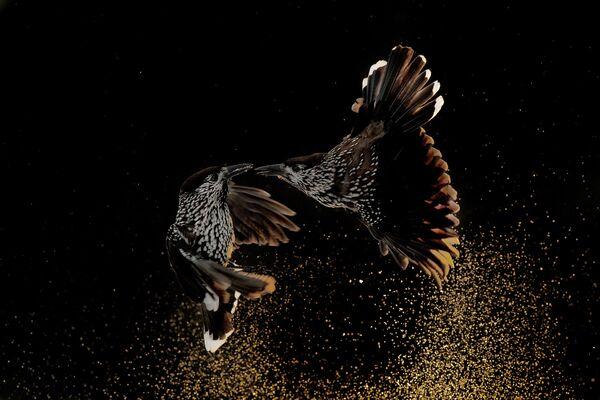 Roelof Molenaar. Работа победителя конкурса Bird Photographer of the Year 2020
