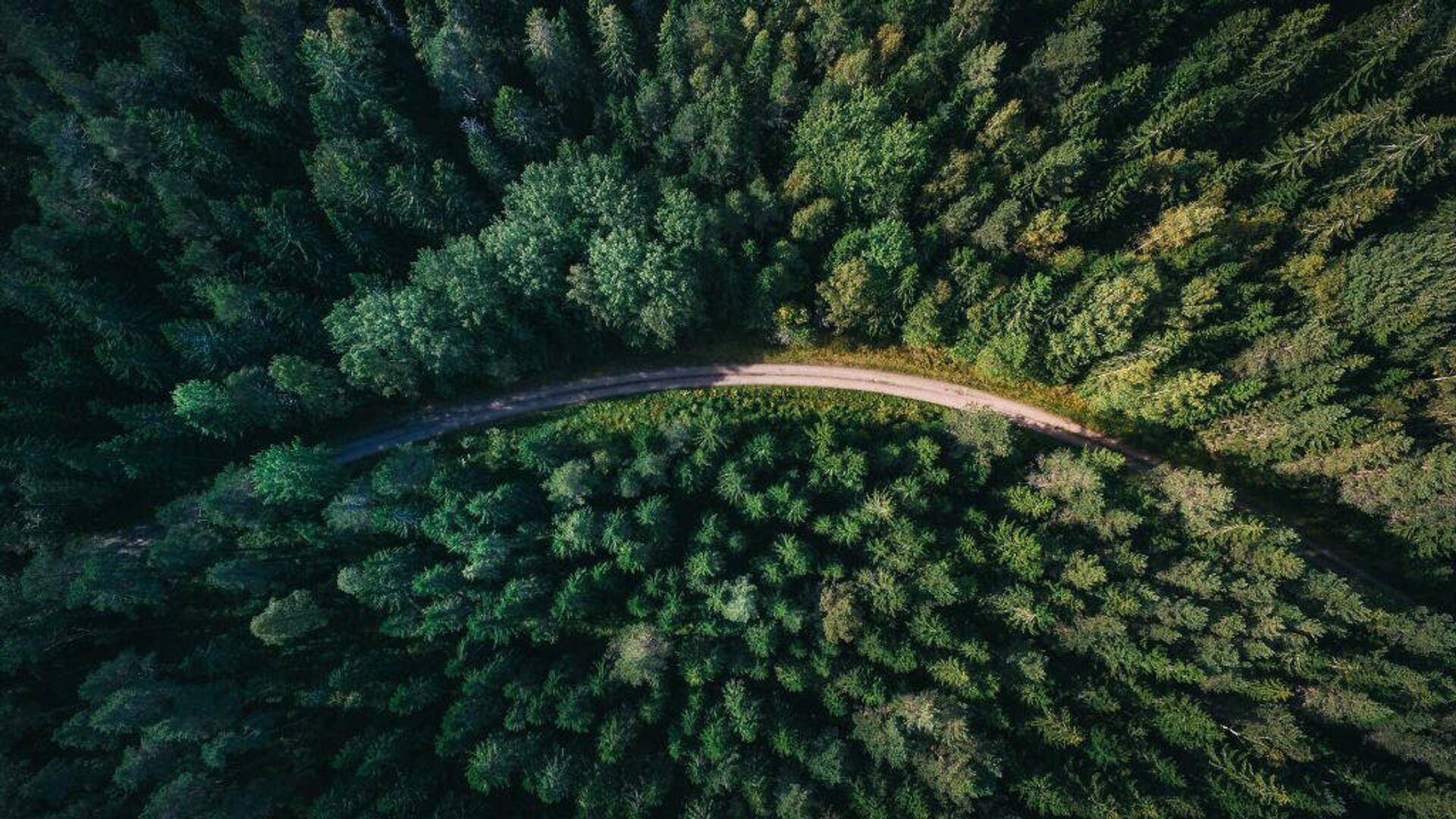 Вид на лес с высоты птичьего полета - РИА Новости, 1920, 10.09.2020