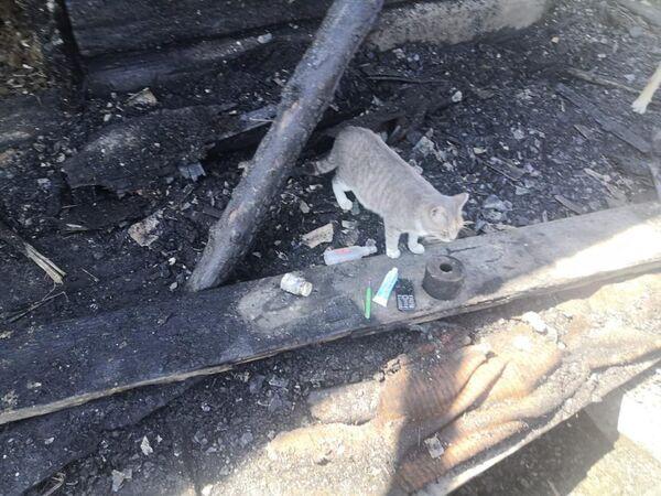 Кошка спасла спящих хозяев при ночном пожаре дома в п. Заречье, г. Биробиджана, Еврейской автономной области