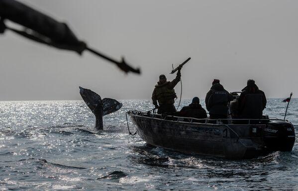 Китобои во время охоты на кита в Беринговом проливе