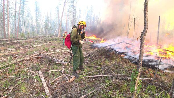 Сотрудники Авиалесоохраны проводят противопожарные мероприятия для препятствия распространения лесных пожаров в Красноярском крае. Стоп-кадр с видео