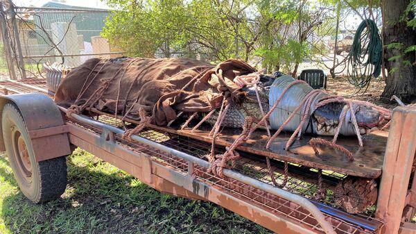 Крокодил весом 350 килограммов, пойманный на севере Австралии