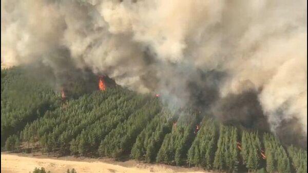 Кадры  лесного пожара в Ростовской области