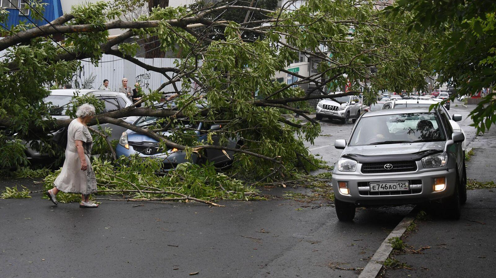 Последствия урагана в москве фото