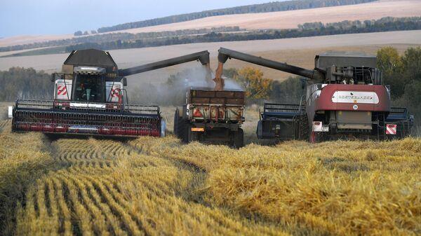 Уборка урожая пшеницы в Красноярском крае