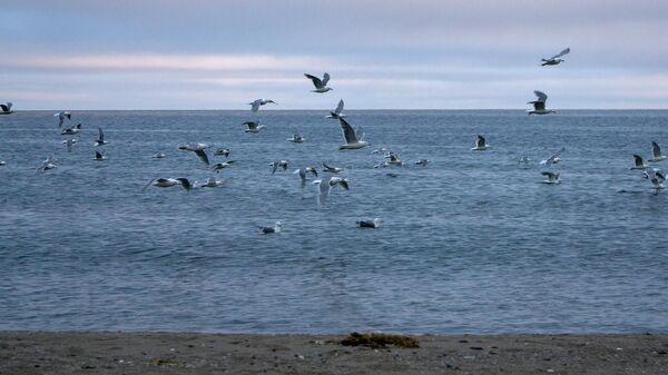 Птицы и море