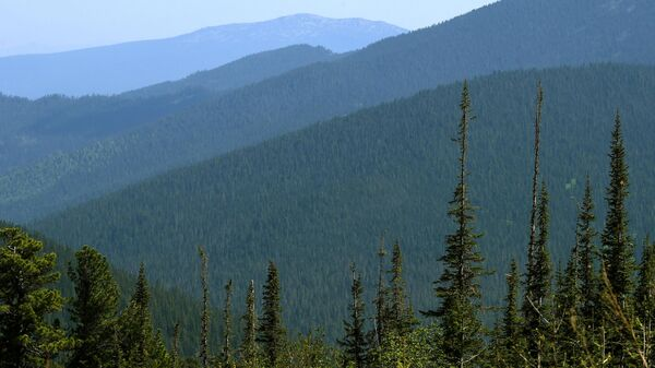 Вид с перевала Кулумыс на горную тайгу в природном парке Ергаки в Красноярском крае