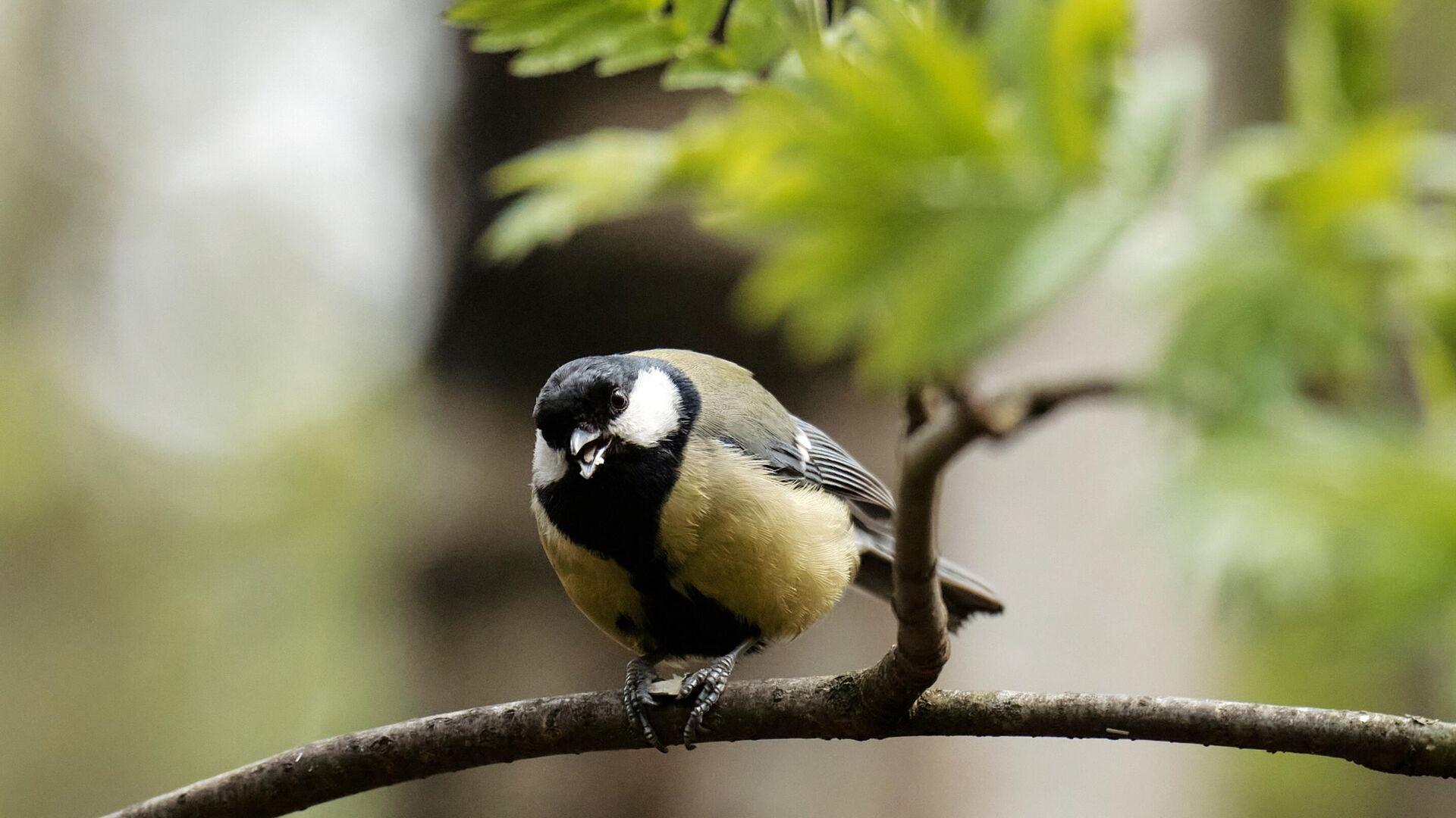 Ученые зафиксировали новый рекорд скорости полета птиц