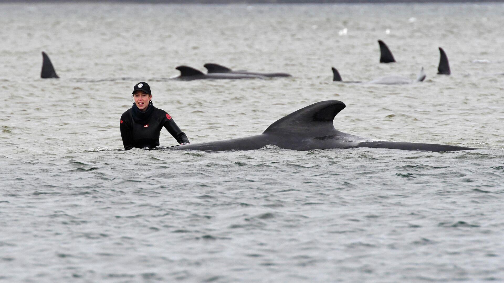 Операция по спасению дельфинов, выбросившихся на отмель у западного побережья австралийского штата Тасмания - РИА Новости, 1920, 25.09.2020