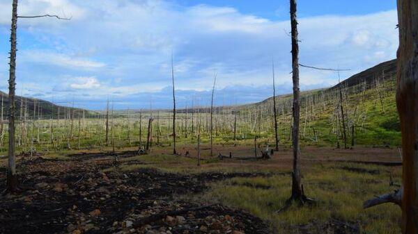 Погибший лес к востоку от Норильска