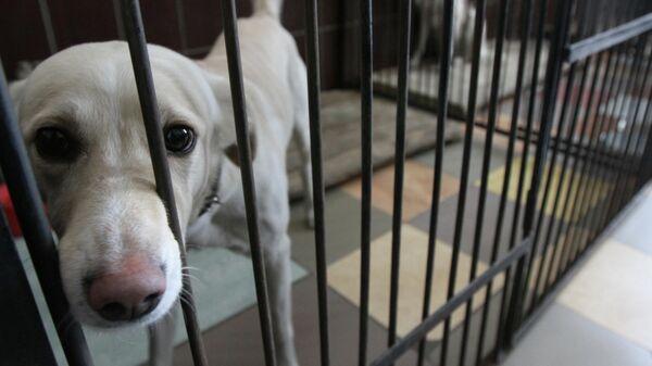 Бездомная собака в приюте для животных