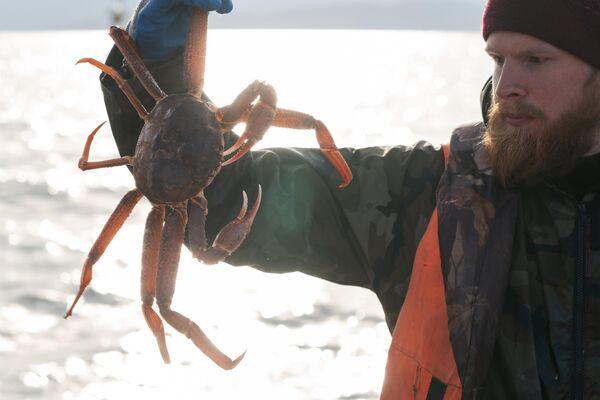 Рыбак демонстрирует свежевыловленного живого краба