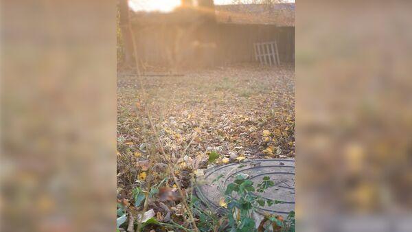 Место обнаружения тела пропавшей в Домодедово школьницы