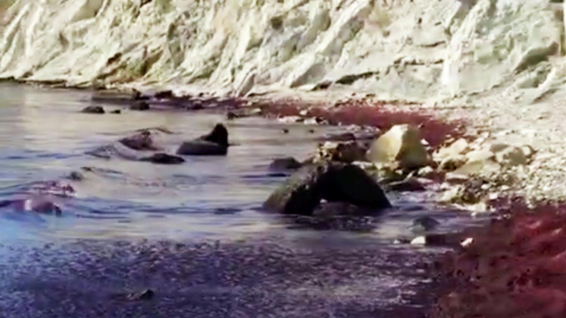 Красное море в поселке Мысхако недалеко от Новороссийска. Стоп-кадр видео - РИА Новости, 1920, 11.03.2021