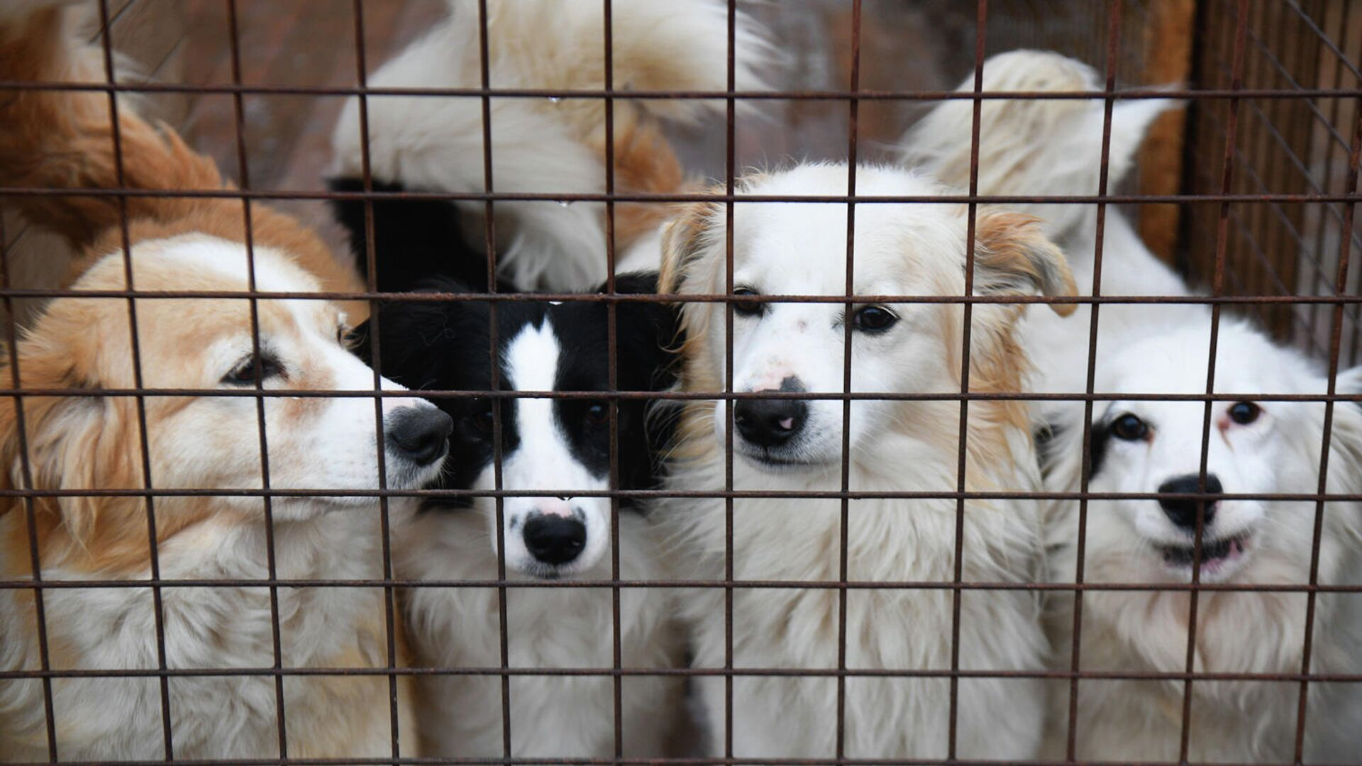 Собаки в вольере приюта для бездомных животных - РИА Новости, 1920, 14.11.2020