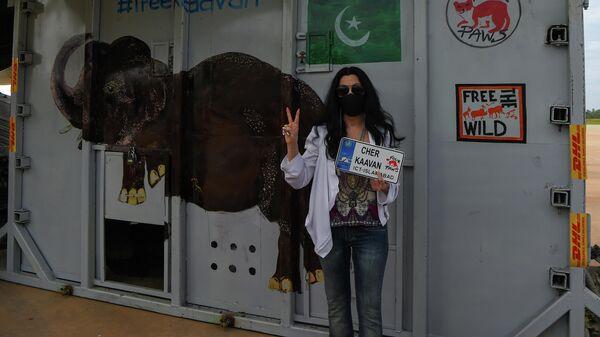 Американская певица Шер рядом с ящиком с азиатским слоном Кааваном по прибытии в Камбоджу