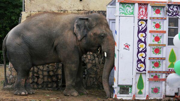 Слон Кааван в зоопарке Маргазар в Исламабаде перед транспортировкой в заповедник в Камбодже