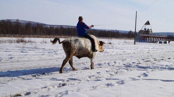 Гонки на быках по-Верхоянски