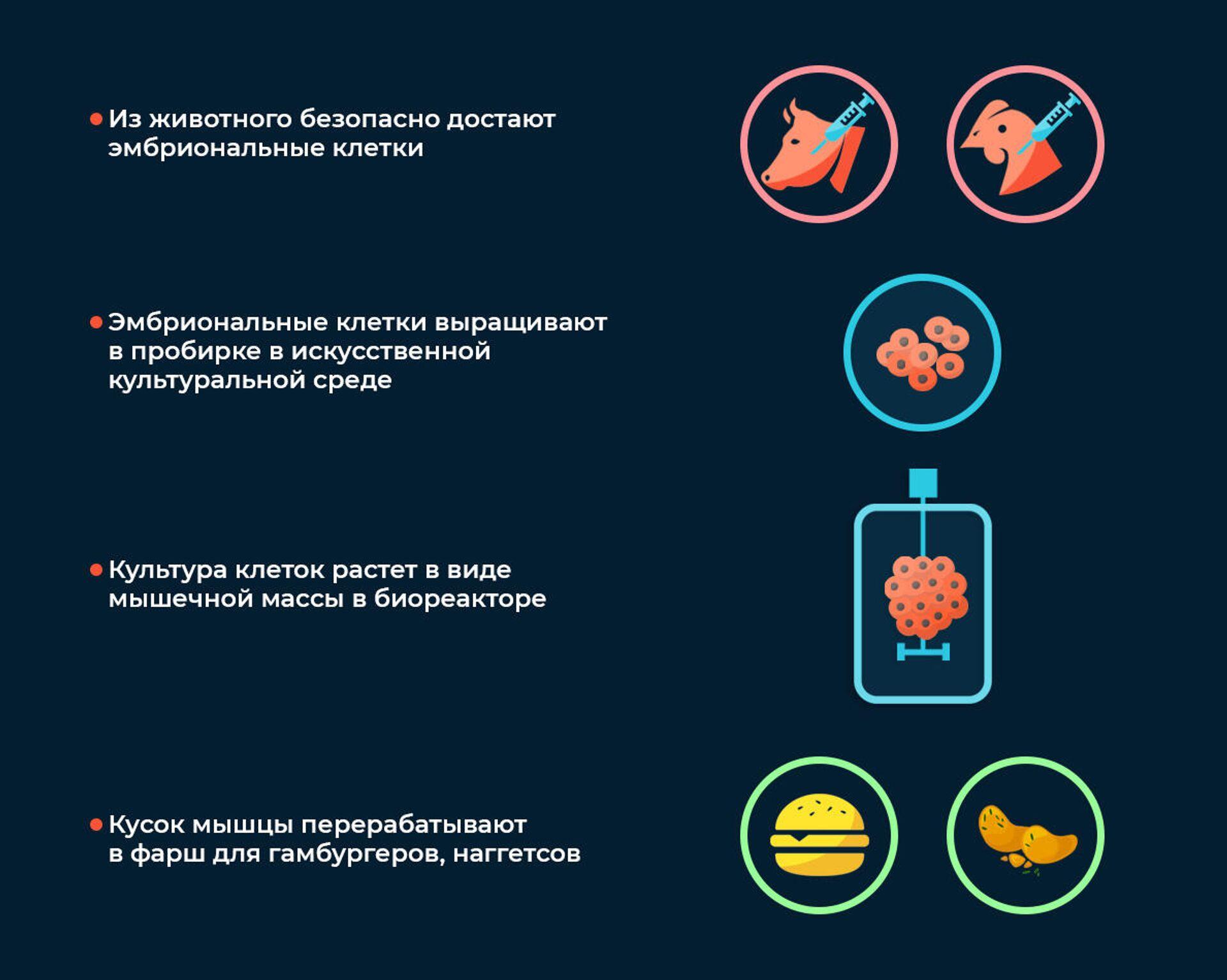 Выращивание чистого мяса - РИА Новости, 1920, 11.12.2020