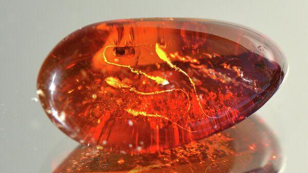 Древнейшая сперма в янтаре (в представлении художника)